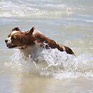 Kaycee Running Free by aussiebushstick