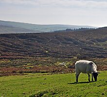 Welcome To Dartmoor, Devon by Andy Mackay
