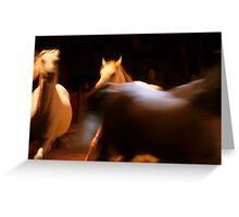 Three white horses running in arena Greeting Card