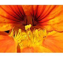 Nasturtium Photographic Print