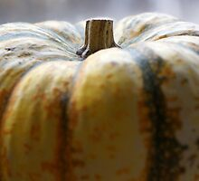 Soft Focus Close-Up of a Small Light-Yellow Pumpkin by Nalinne Jones
