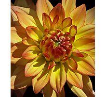 Orange Dahlia Macro. Photographic Print