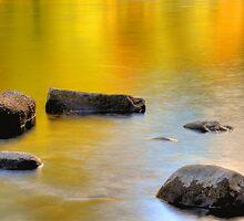 Golden Glow Of Fall Colors by Jennifer Hulbert-Hortman