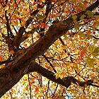 Fall Colors by ienemien