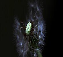 Dandelion (iPhone case) by AnaBanana