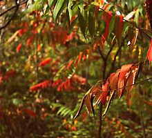 Red Leaves - Fall Weather by ewatt94