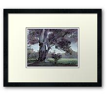 Parklands gum Framed Print