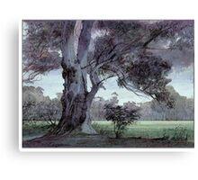 Parklands gum Canvas Print