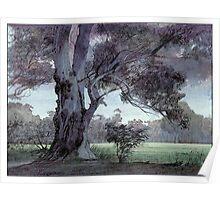 Parklands gum Poster