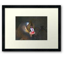 Baboons, Male and Female Framed Print