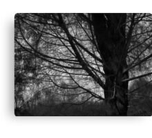 Scary Trees- Black Hill Native Pine Canvas Print