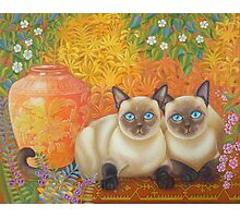 Moon Diamond Siamese Photographic Print