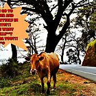 No Bulls**t Allowed! (please see description) by Kanages Ramesh