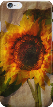 Sunflower iPhone Case by Carol Bleasdale