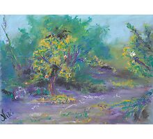 Dusk in the Grove (pastel) Photographic Print