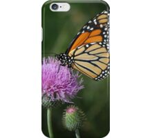 Monarch on Thistle - iPhone Case iPhone Case/Skin