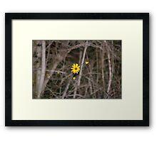 Desolate Beauty Framed Print