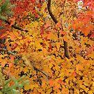 Autumn's Color Palette by kenspics