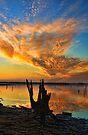 Reach For The Sky by Carolyn  Fletcher