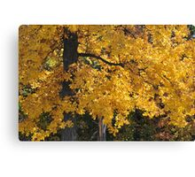Golden Autumn Parker, IN Canvas Print