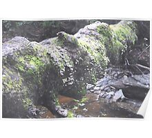 Mossy Tree Down Poster