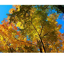 Canopy of Color Photographic Print