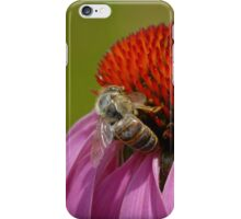 Bee on Cone Flower - iPhone Case iPhone Case/Skin