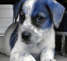 Blue Puppy by Sam Warner