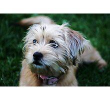 Skye Dog Spy Dog Photographic Print