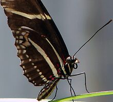 Butterfly by Sam Warner