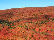 North Shore in Autumn by Michael L. Colwell