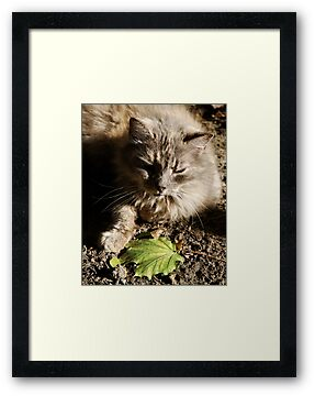 Cat with Leaf by Barry Doherty