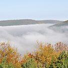 Valley of Fog by Jill Vadala