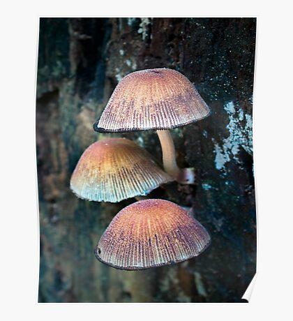 Mushroom Villa Poster
