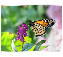 Monarch on Purple Flowers Poster