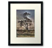 Morning Mist and Elder Tree  Framed Print
