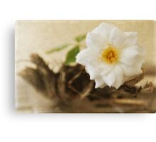 Petite Tree Rose on Driftwood Canvas Print