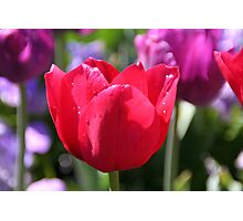 Spring Has Sprung - Red Beauty Photographic Print