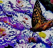 Butterfly and Mums by Eileen Brymer