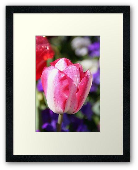 Spring Has Sprung - Strawbs n Cream by Sally Haldane