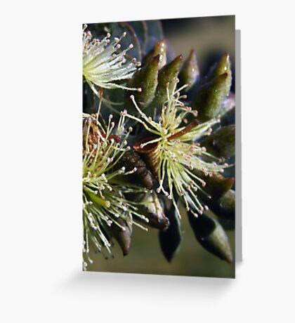 Bookleaf Mallee ~ Candy Matthews Greeting Card