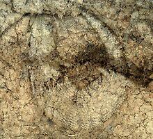 Fossilization by Ben Loveday