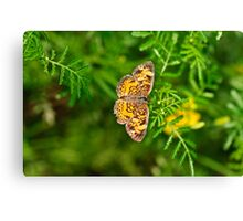 Variegated Fritillary Canvas Print