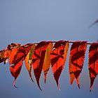 Autumn Sumac Over the Lake by Adam Bykowski