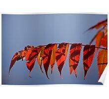 Autumn Sumac Over the Lake Poster