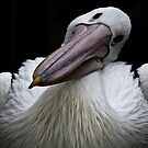 pelican iPhone cover by Lisa  Kenny