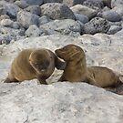 Galapagos Islands: Baby Sea Lion Pups by tpfmiller
