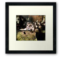 Sleepy Snow Leopard Framed Print