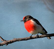 Red-capped Robin by mosaicavenues