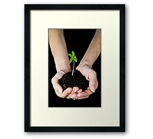 Woman's hands holding seedling Framed Print
